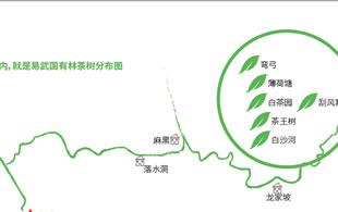 易武国有林概念茶