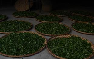 2016年(收藏级)精品古茶即将上市